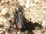 Séminaire CDoums fourmi