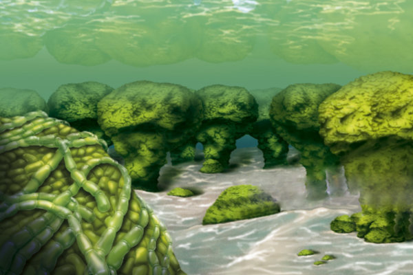 Cyanobacteria And Stromatolites. Illustration Of A Sea Bed With Stromatolites, Lithified Sedimentary Structures Made Up Of Cyanobacterial Debris Formed During Photosynthesis O2. (Photo By BSIP/UIG Via Getty Images)